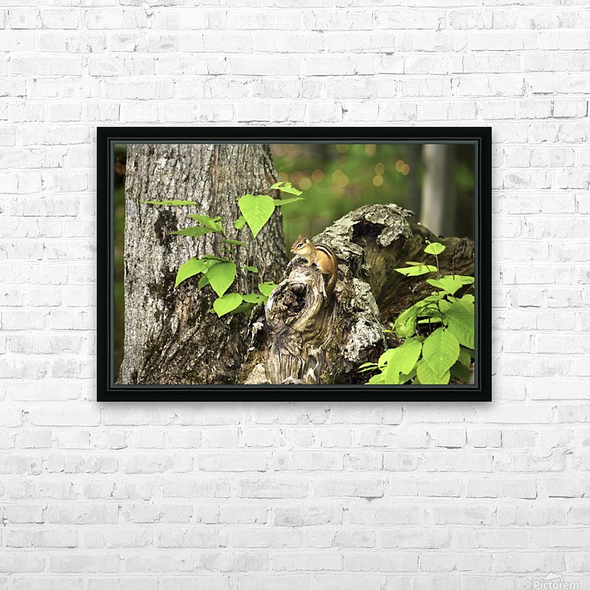 Chipmunk on tree HD Sublimation Metal print with Decorating Float Frame (BOX)