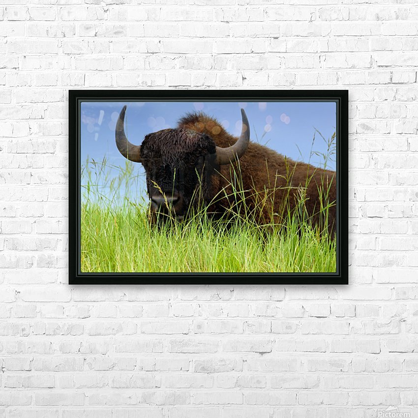 Female Bison HD Sublimation Metal print with Decorating Float Frame (BOX)