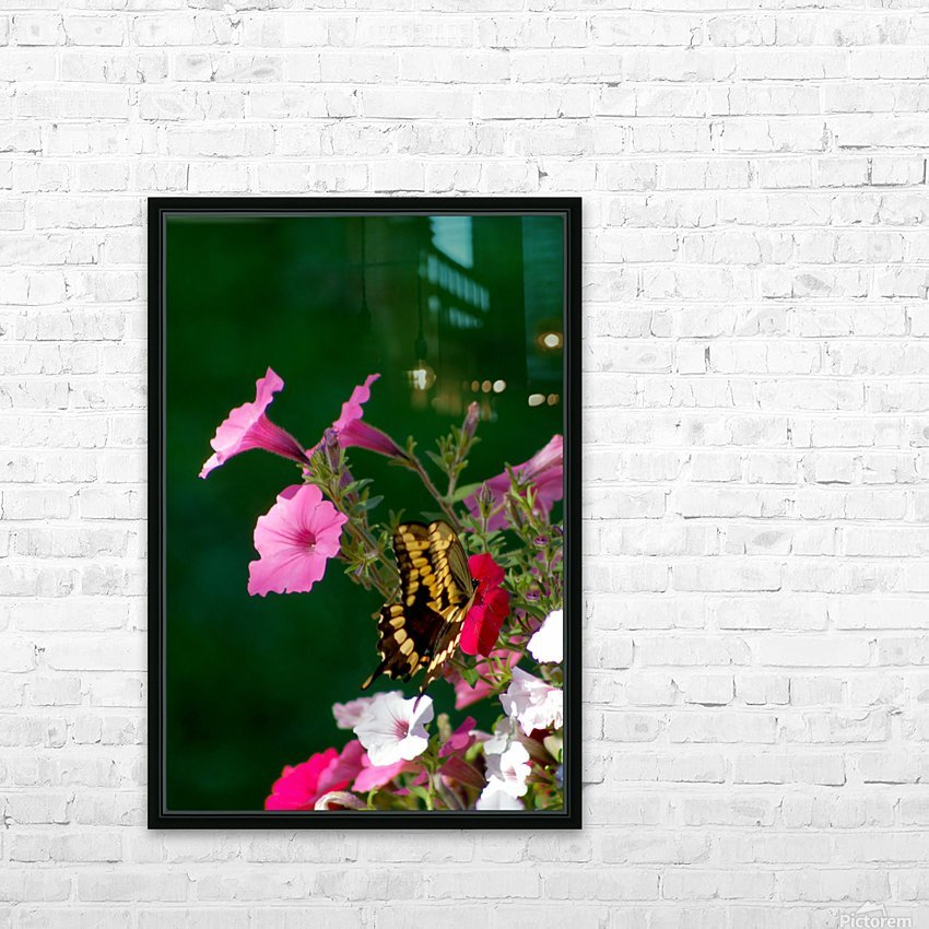 Butterfly on petunias HD Sublimation Metal print with Decorating Float Frame (BOX)