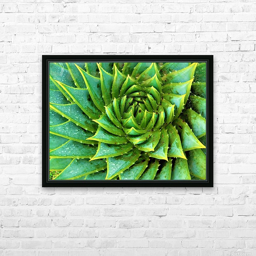 Cactus Spiral HD Sublimation Metal print with Decorating Float Frame (BOX)