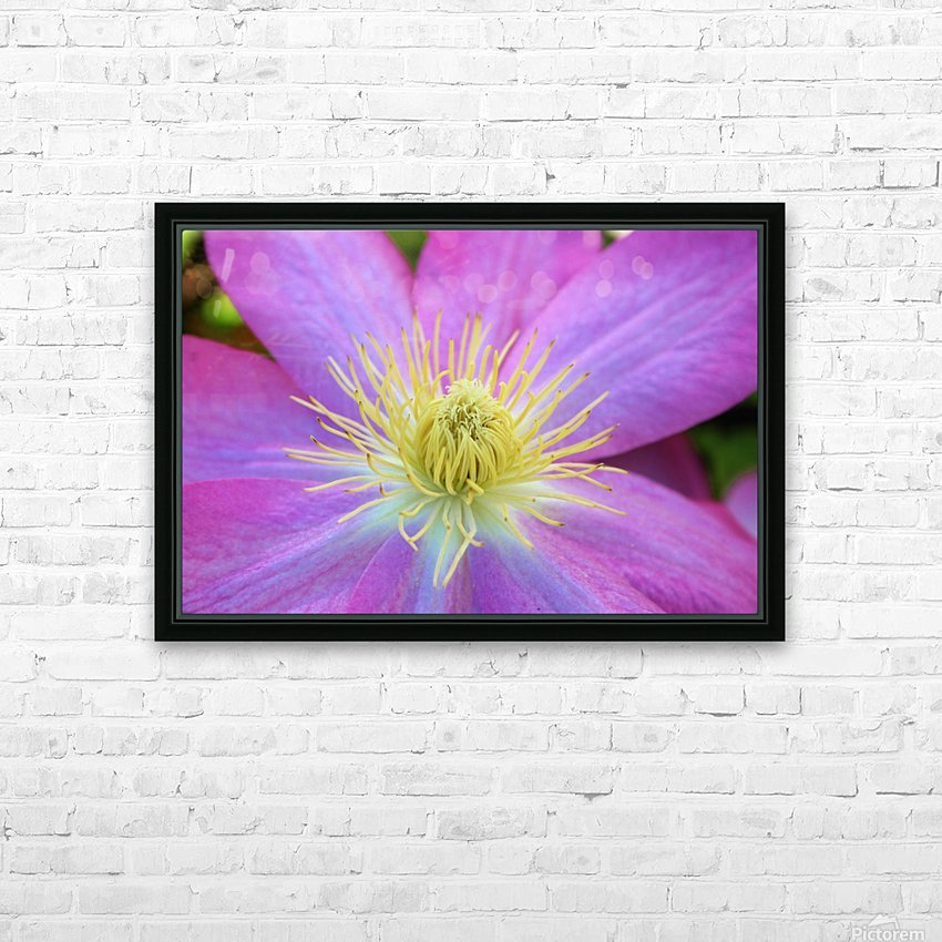 Purple Clematis HD Sublimation Metal print with Decorating Float Frame (BOX)