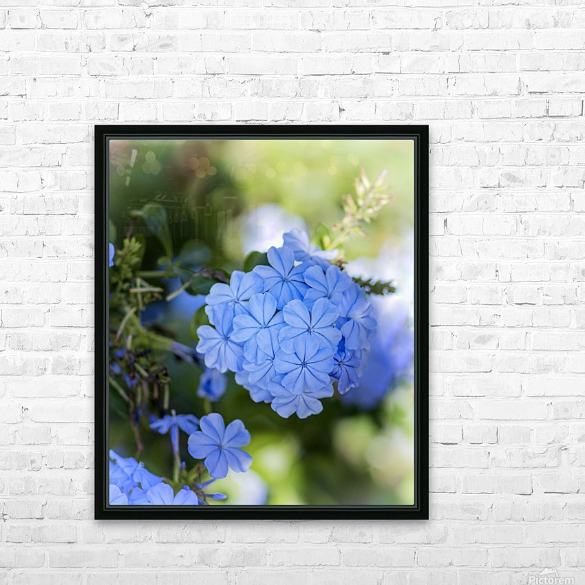 Plumbago HD Sublimation Metal print with Decorating Float Frame (BOX)
