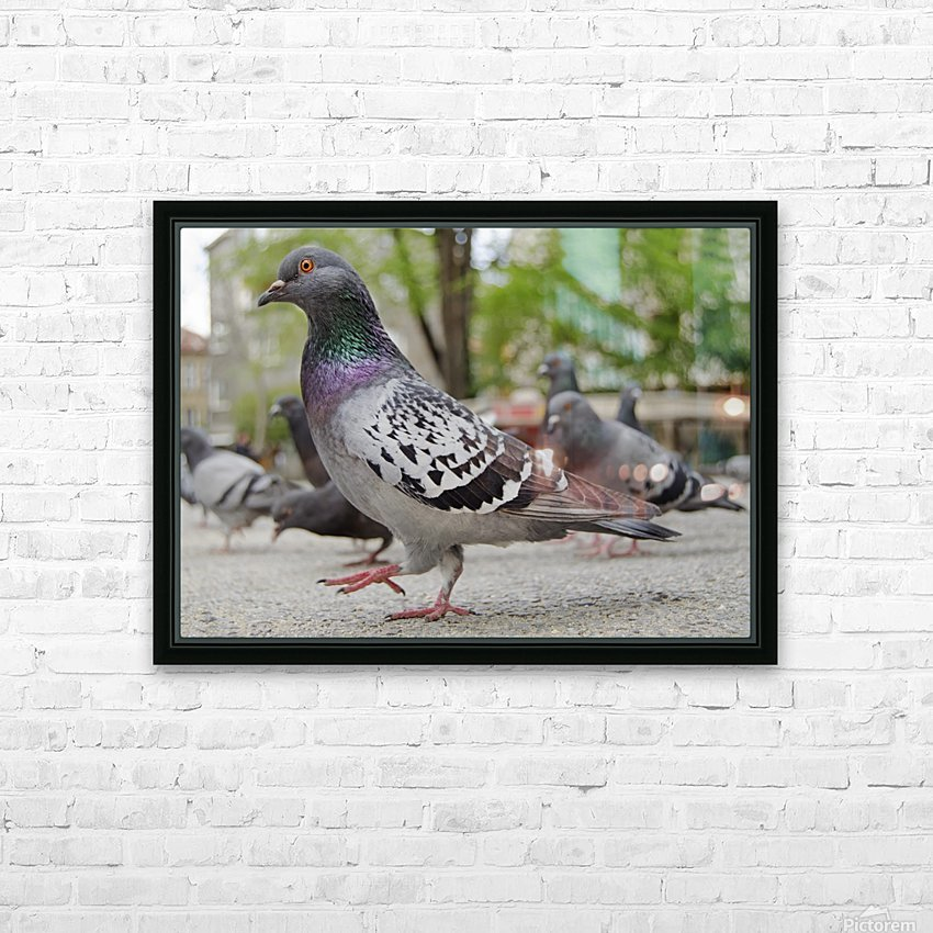 Pigeon in the park HD Sublimation Metal print with Decorating Float Frame (BOX)