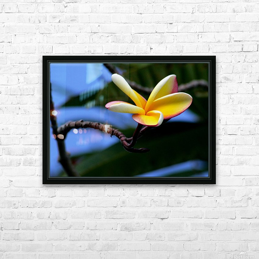Yellow Plumeria  HD Sublimation Metal print with Decorating Float Frame (BOX)