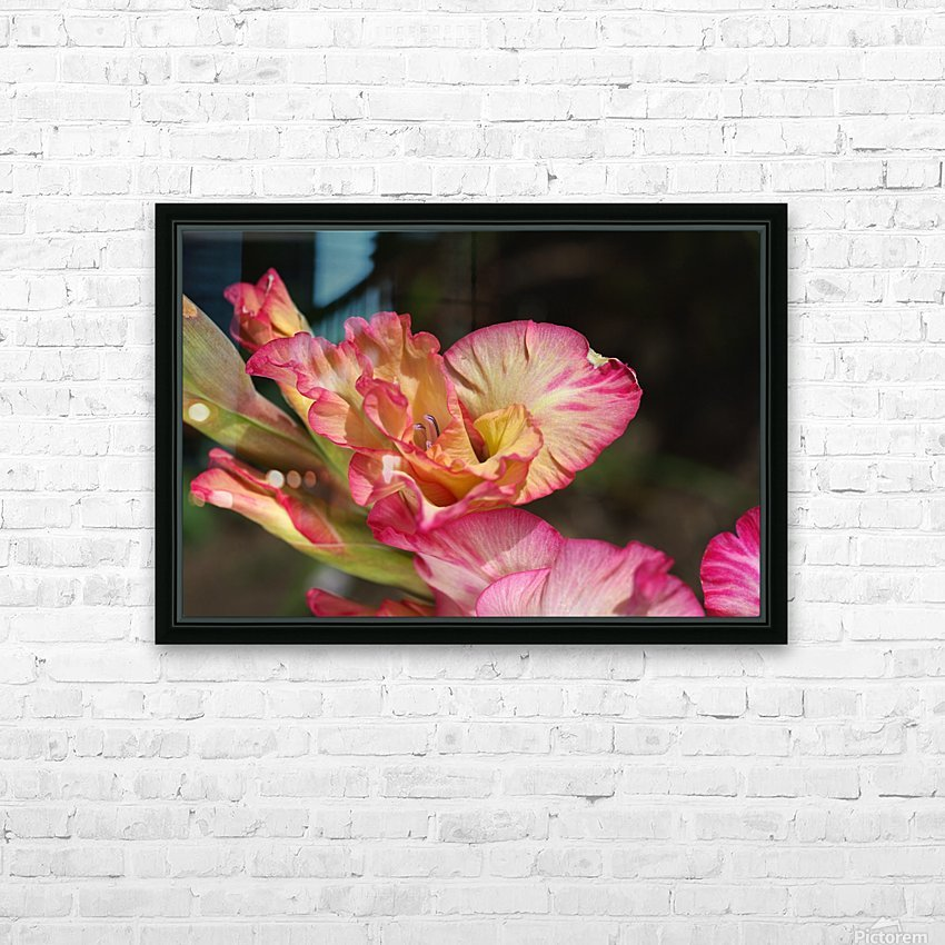 Gladiolus Display HD Sublimation Metal print with Decorating Float Frame (BOX)