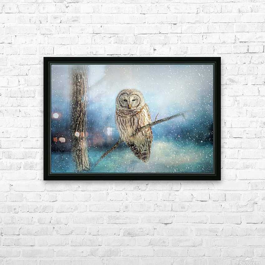 Barred Owl Solitude HD Sublimation Metal print with Decorating Float Frame (BOX)