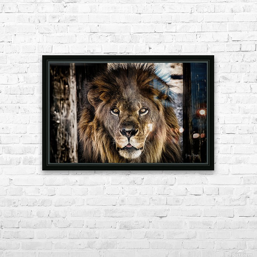 A Regal Lion HD Sublimation Metal print with Decorating Float Frame (BOX)