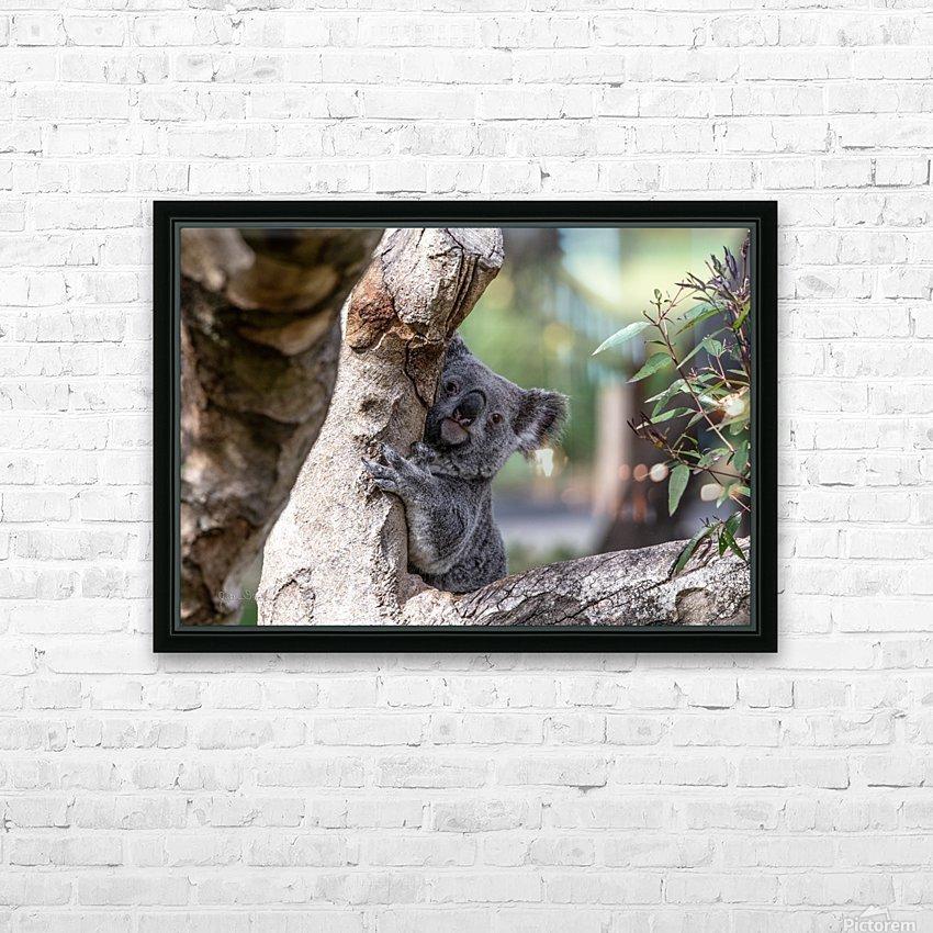 Australias Own Koala Bear HD Sublimation Metal print with Decorating Float Frame (BOX)