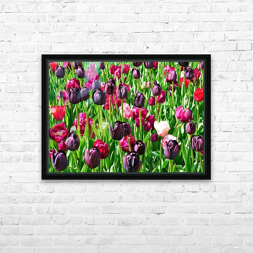 Field of Tulips HD Sublimation Metal print with Decorating Float Frame (BOX)
