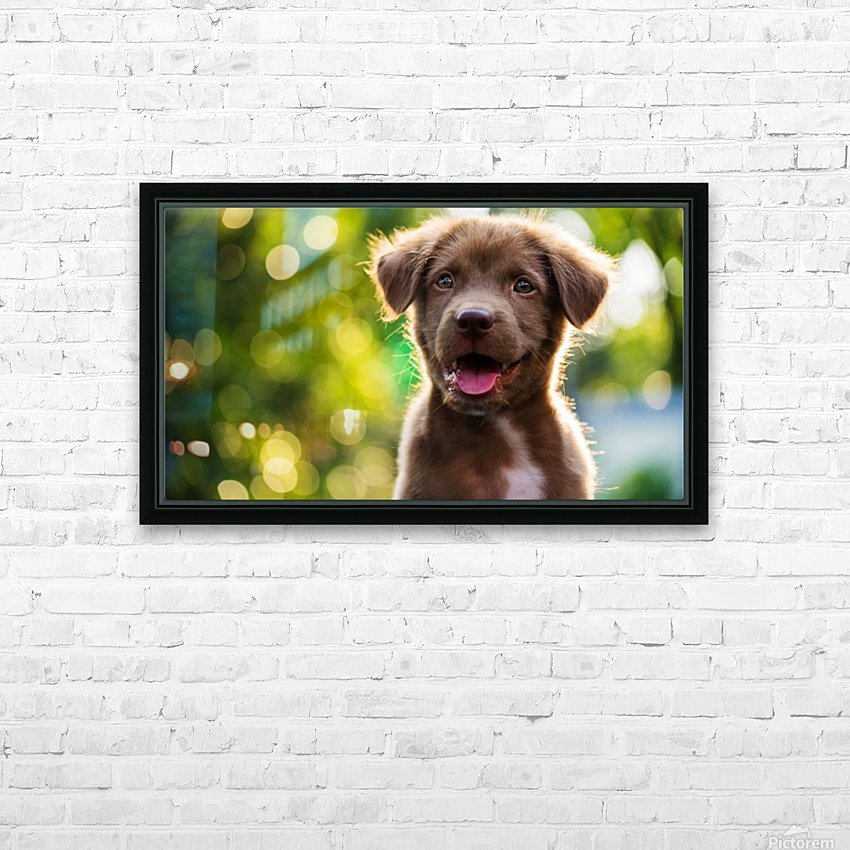 emotional support animal letter HD Sublimation Metal print with Decorating Float Frame (BOX)