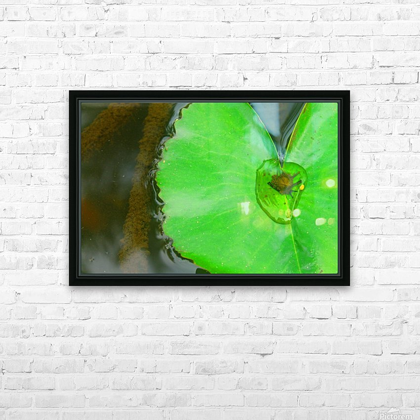 Lily Pad HD Sublimation Metal print with Decorating Float Frame (BOX)