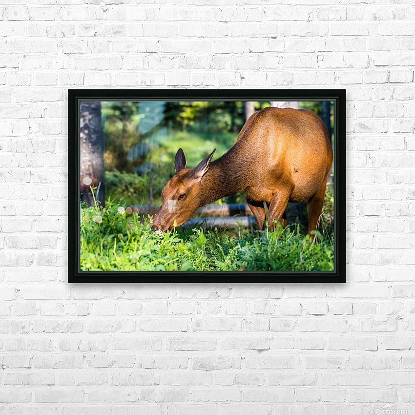 Baby Elk HD Sublimation Metal print with Decorating Float Frame (BOX)