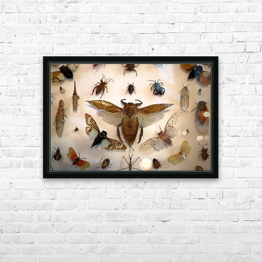 Biodiversity HD Sublimation Metal print with Decorating Float Frame (BOX)