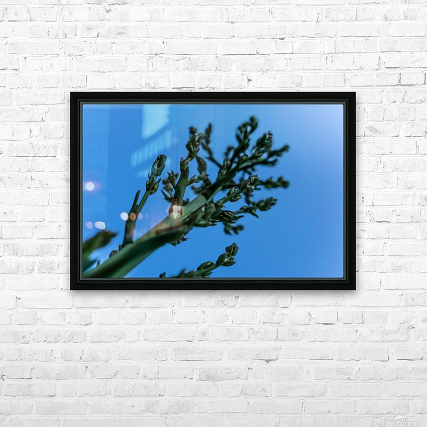 Yucca Skies HD Sublimation Metal print with Decorating Float Frame (BOX)