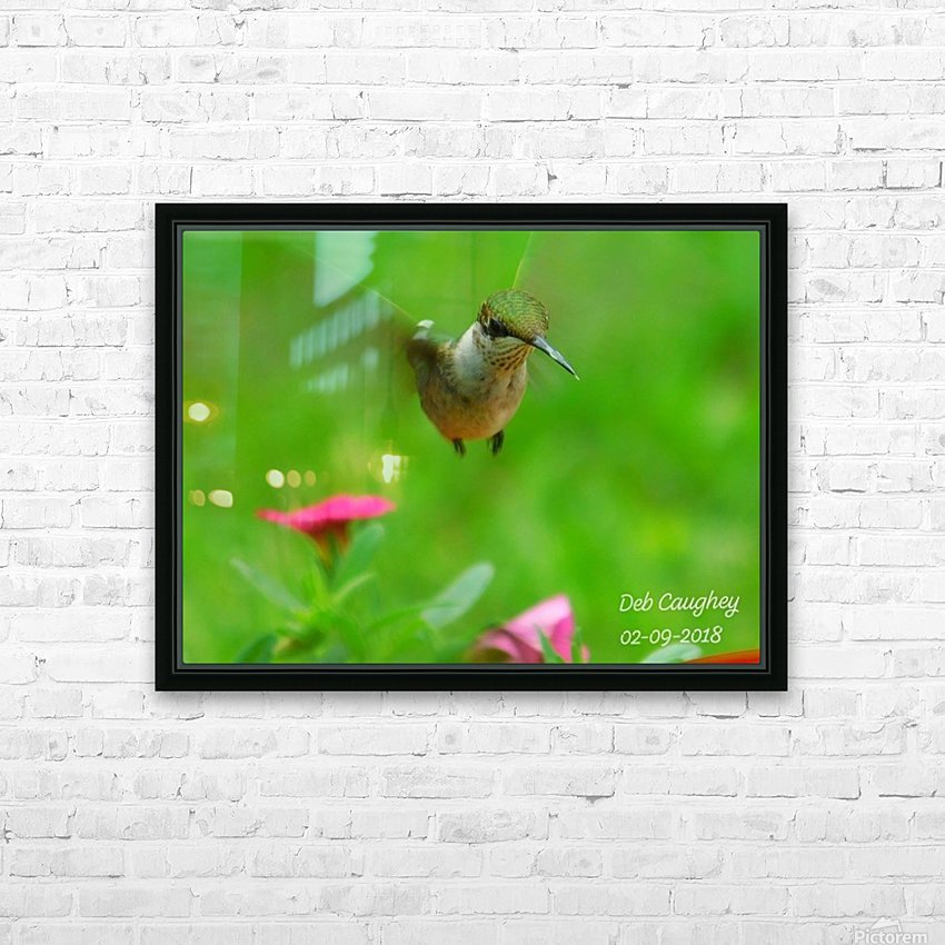 Ruby throated hummingbird HD Sublimation Metal print with Decorating Float Frame (BOX)