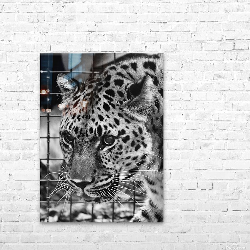 Leopard in Black & White HD Sublimation Metal print with Decorating Float Frame (BOX)