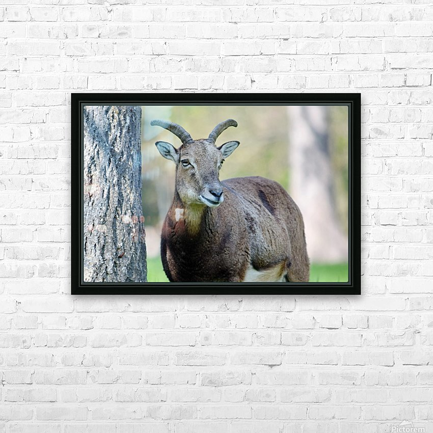 Mouflon in the Forest Portrait HD Sublimation Metal print with Decorating Float Frame (BOX)