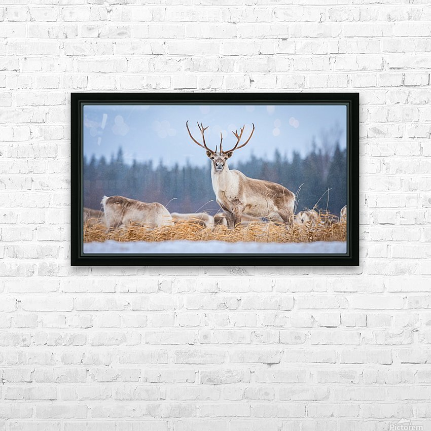 Majestic HD Sublimation Metal print with Decorating Float Frame (BOX)