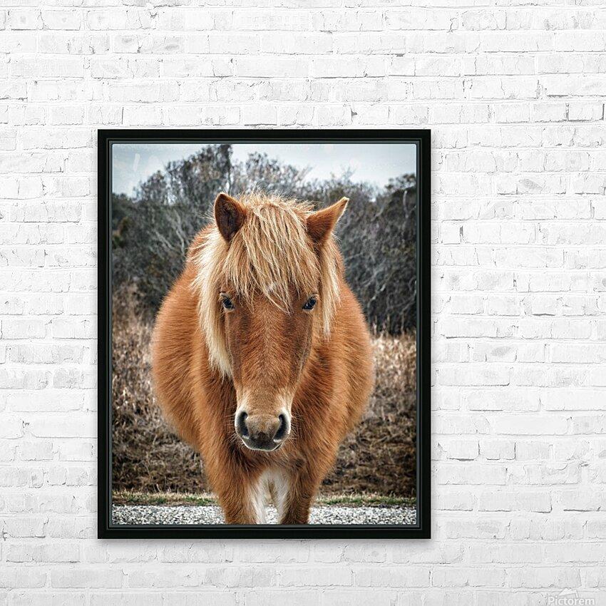 Assateague Horse Miekes NoeLani HD Sublimation Metal print with Decorating Float Frame (BOX)