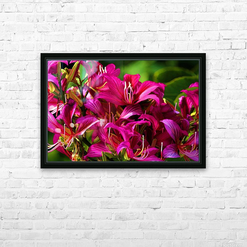 Hong Kong Orchid HD Sublimation Metal print with Decorating Float Frame (BOX)