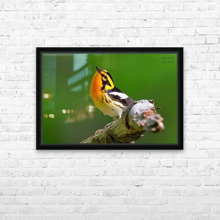 Birds HD Sublimation Metal print with Decorating Float Frame (BOX)