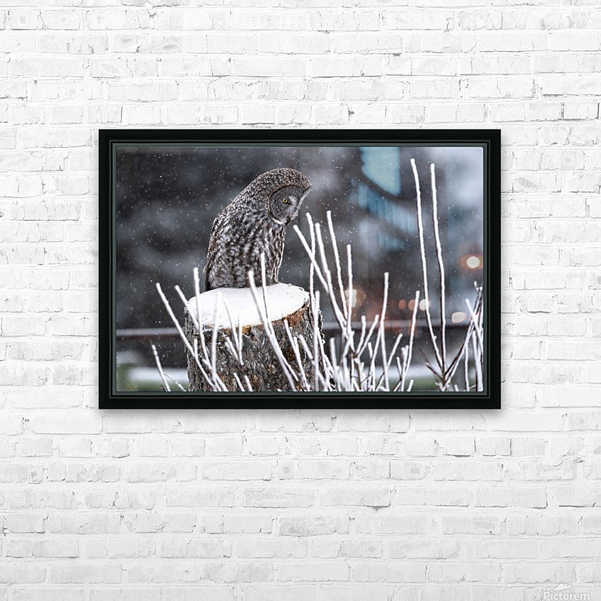 Great Grey Owl - Hunting at sunset.   Alberta Canada HD Sublimation Metal print with Decorating Float Frame (BOX)