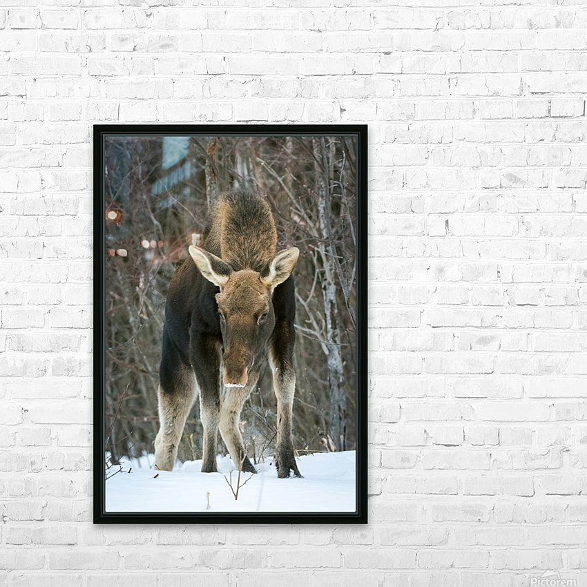 Mr. Moose HD Sublimation Metal print with Decorating Float Frame (BOX)