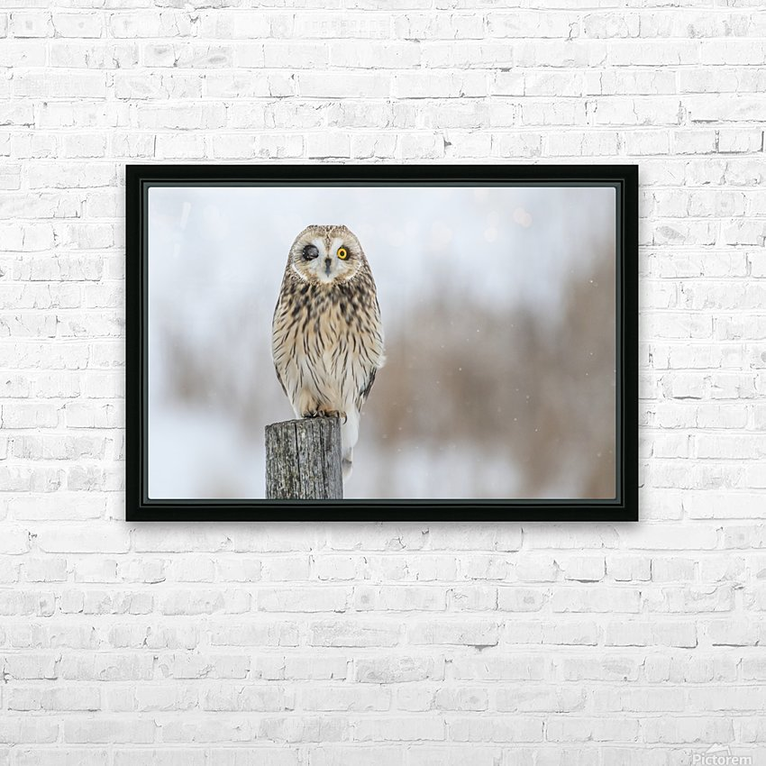 Short Eared Owl - Wink HD Sublimation Metal print with Decorating Float Frame (BOX)