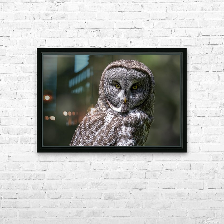 Great Grey Owl - Up close HD Sublimation Metal print with Decorating Float Frame (BOX)