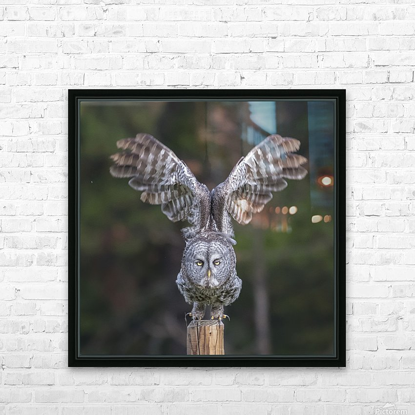 Great Grey Owl - Cleared for Take Off HD Sublimation Metal print with Decorating Float Frame (BOX)