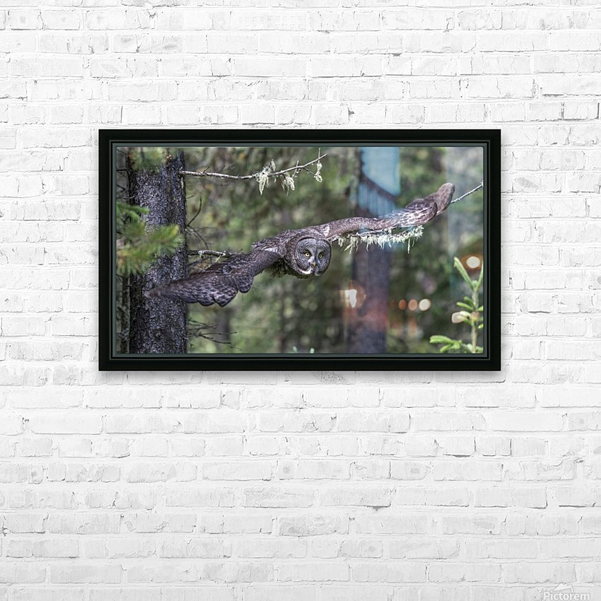 Great Grey Owl - Wing Span HD Sublimation Metal print with Decorating Float Frame (BOX)