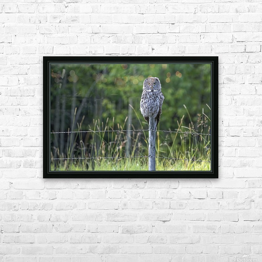 Great Grey Owl - Henry HD Sublimation Metal print with Decorating Float Frame (BOX)