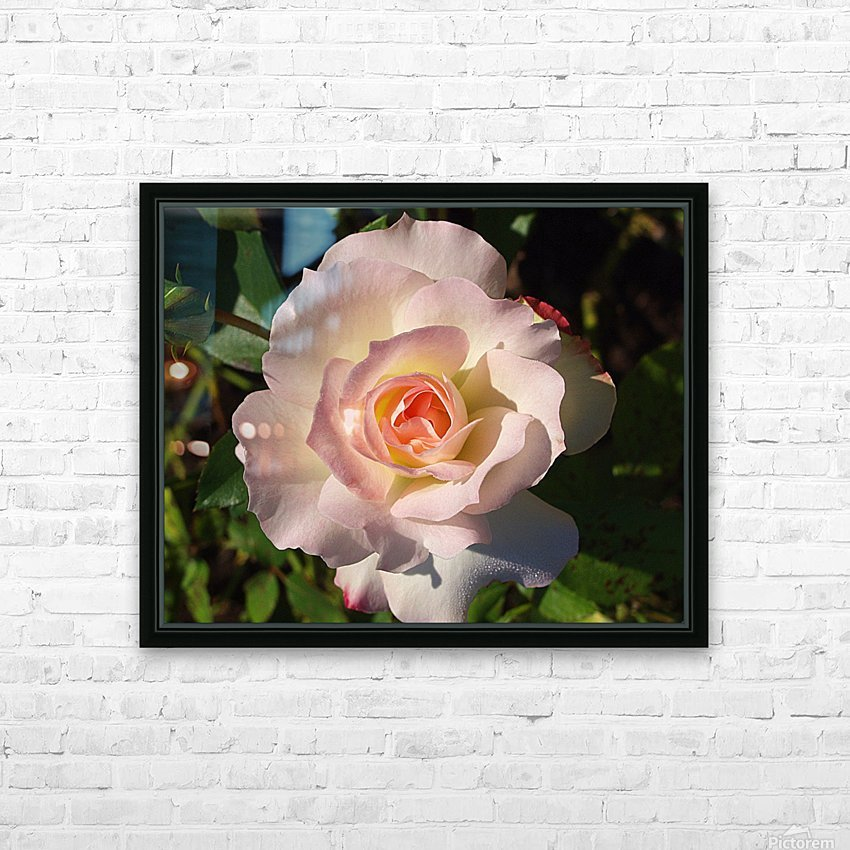 Pink Rose HD Sublimation Metal print with Decorating Float Frame (BOX)