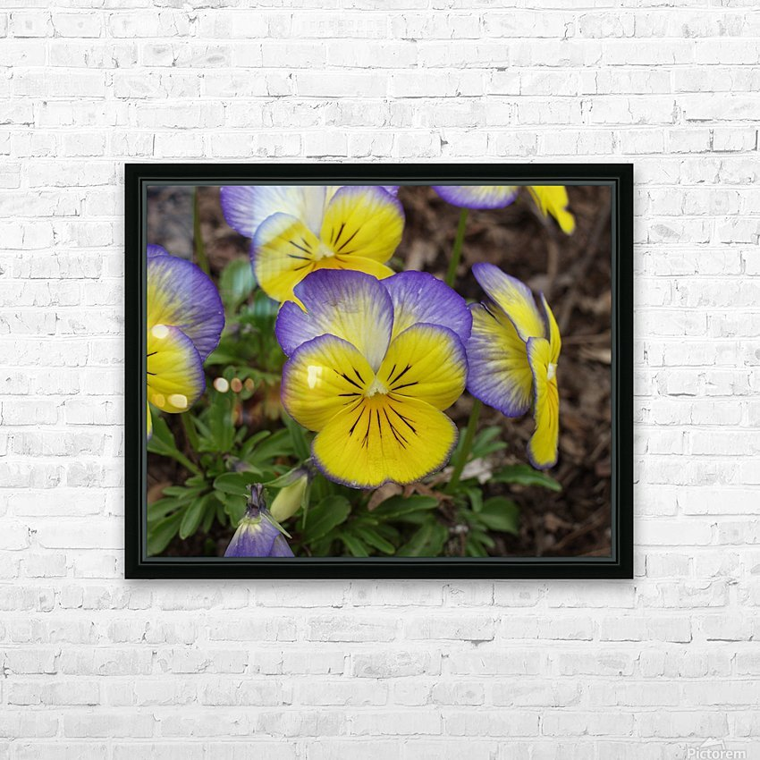 Pansy HD Sublimation Metal print with Decorating Float Frame (BOX)