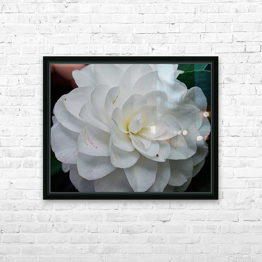 Camelia HD Sublimation Metal print with Decorating Float Frame (BOX)