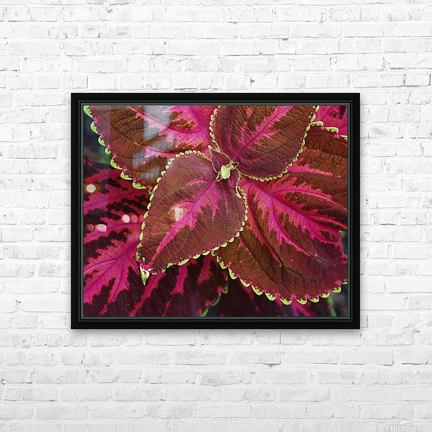 Coleus HD Sublimation Metal print with Decorating Float Frame (BOX)