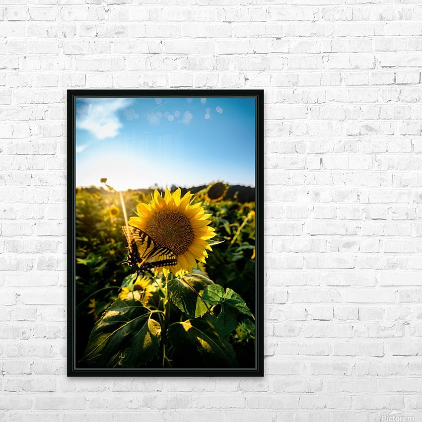 Sunflower Love HD Sublimation Metal print with Decorating Float Frame (BOX)