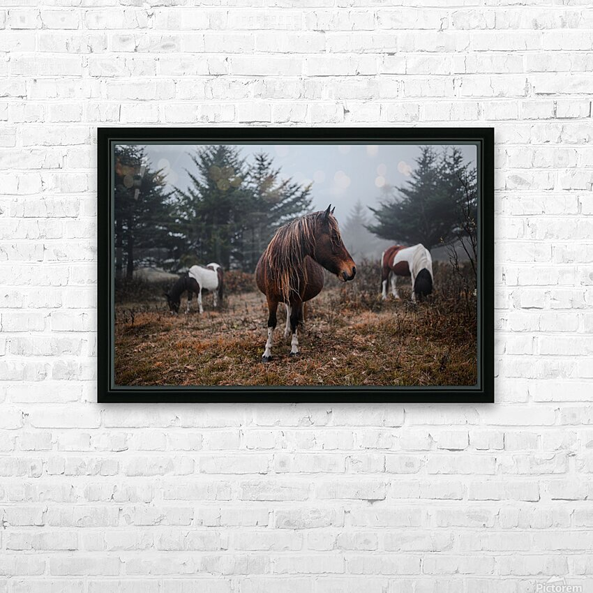 In the Wild HD Sublimation Metal print with Decorating Float Frame (BOX)