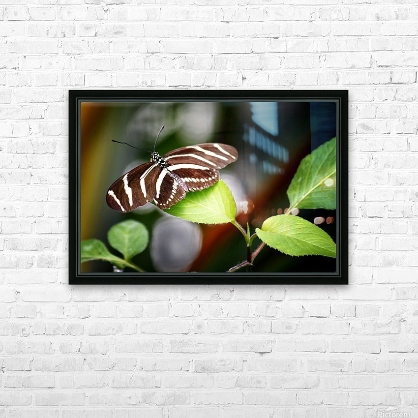 Stripped Butterfly HD Sublimation Metal print with Decorating Float Frame (BOX)