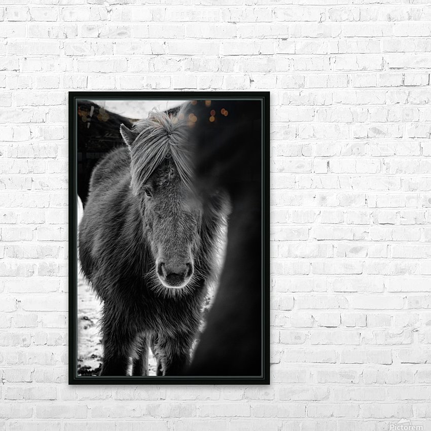 Icelandic Foal HD Sublimation Metal print with Decorating Float Frame (BOX)