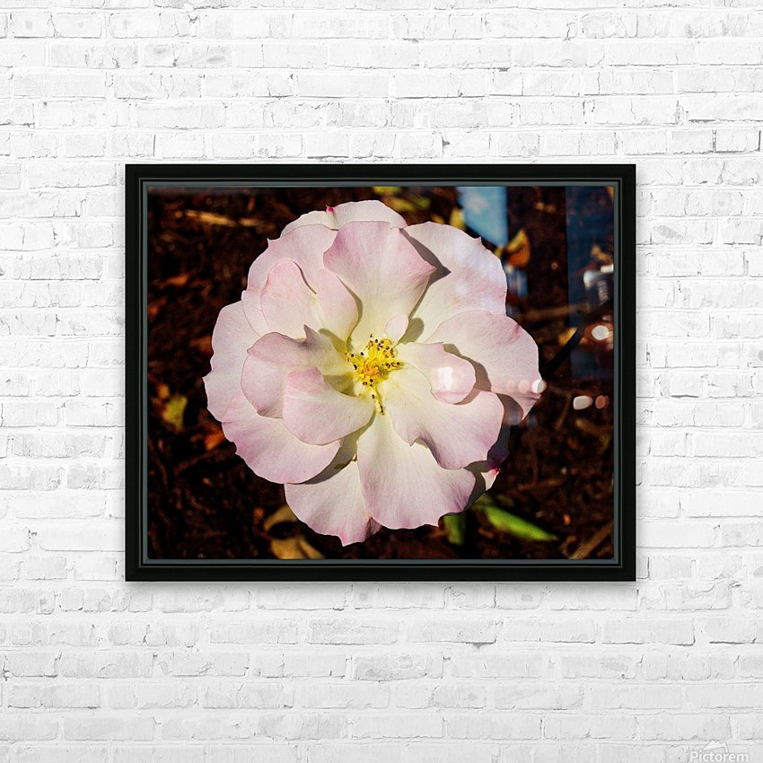 Pink Rose 2 HD Sublimation Metal print with Decorating Float Frame (BOX)