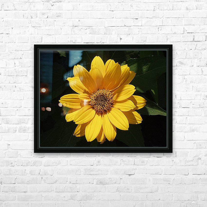Yellow Zinnia HD Sublimation Metal print with Decorating Float Frame (BOX)