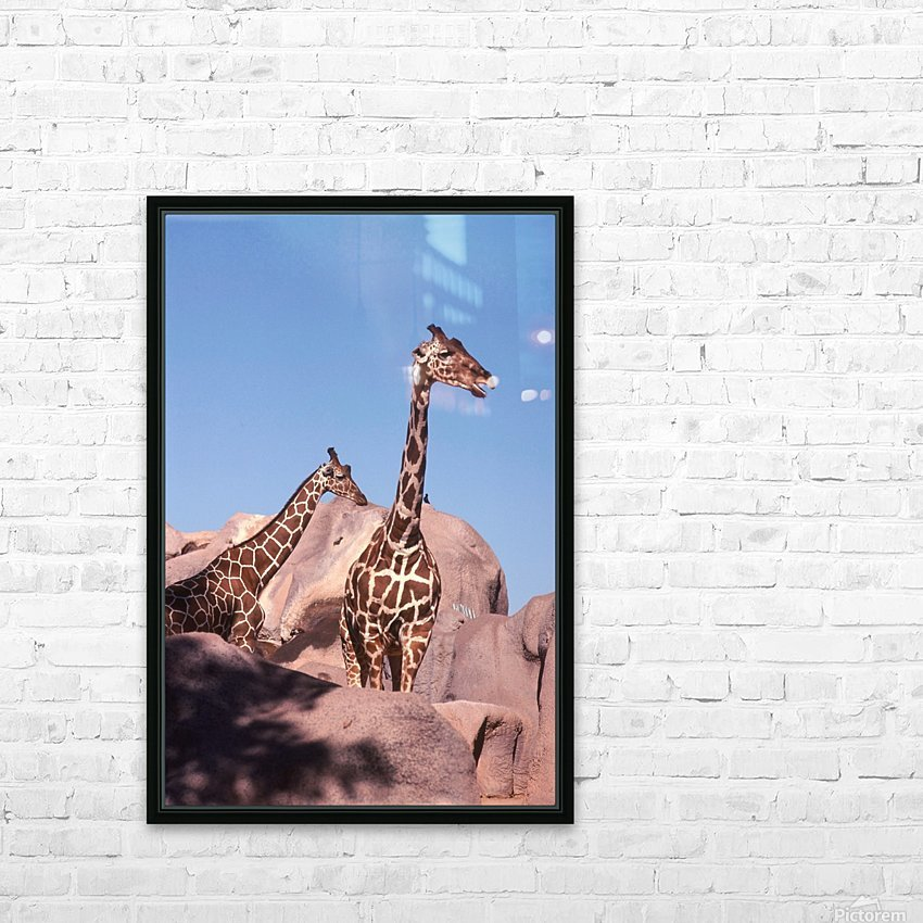 Giraffe Photograph HD Sublimation Metal print with Decorating Float Frame (BOX)