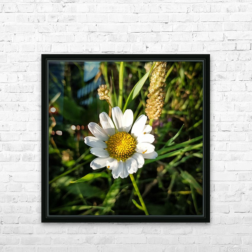 Little daisy in grass HD Sublimation Metal print with Decorating Float Frame (BOX)
