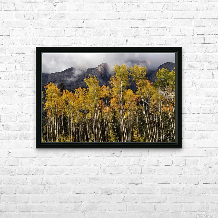 Aspens In Fall Banff National Park HD Sublimation Metal print with Decorating Float Frame (BOX)