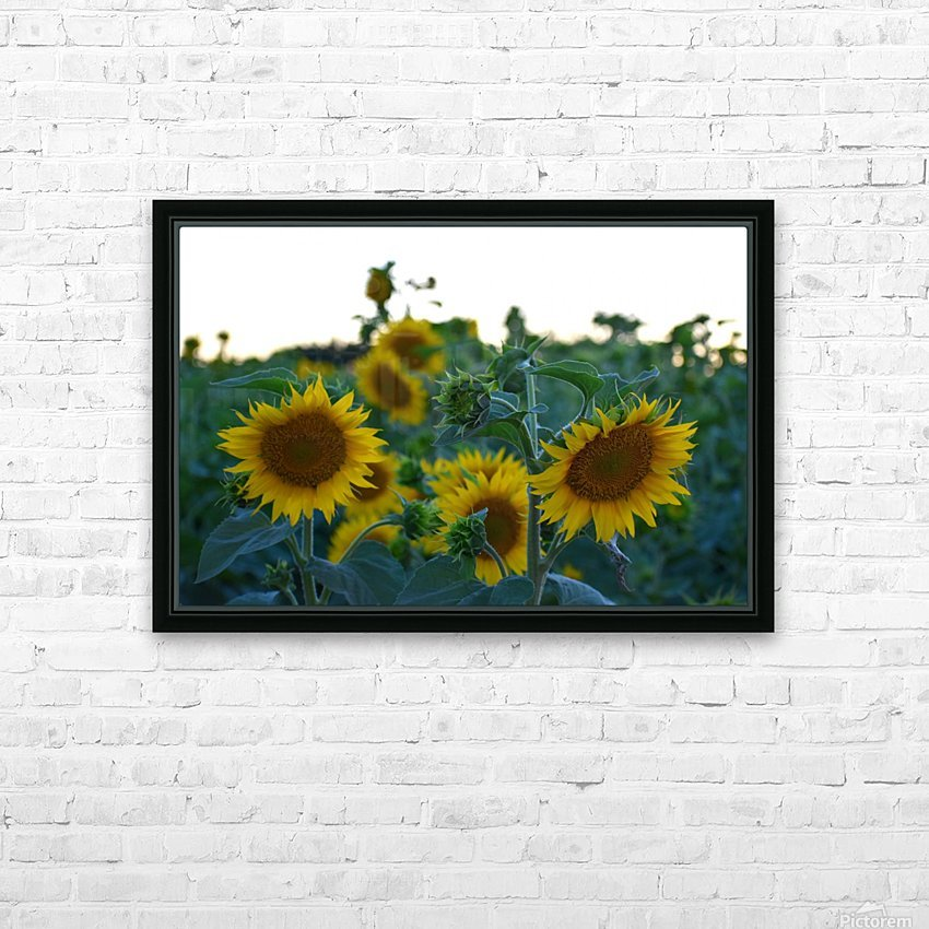 Sunflower Family HD Sublimation Metal print with Decorating Float Frame (BOX)