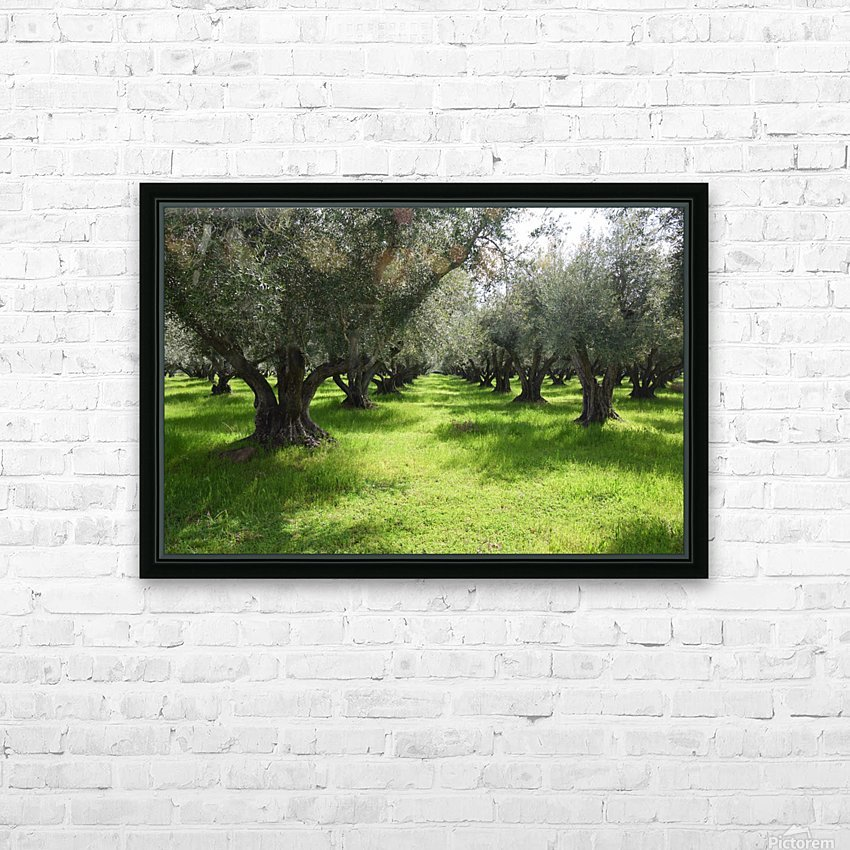 Olive Orchard In Spring HD Sublimation Metal print with Decorating Float Frame (BOX)