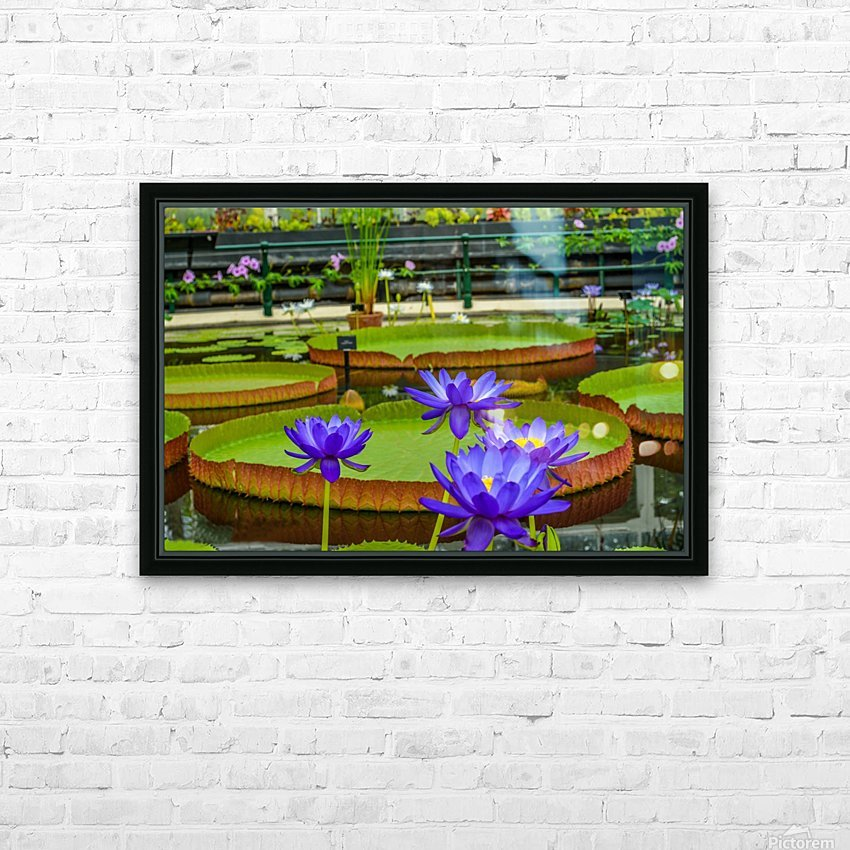 Purple water lily in a pond HD Sublimation Metal print with Decorating Float Frame (BOX)