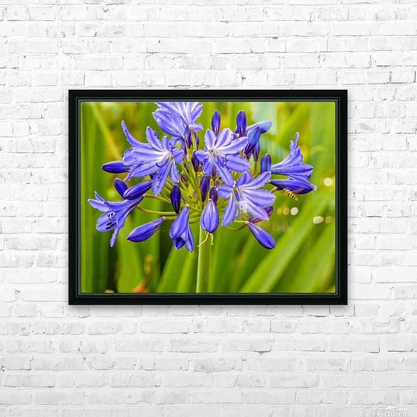 Close up of purple flowers HD Sublimation Metal print with Decorating Float Frame (BOX)
