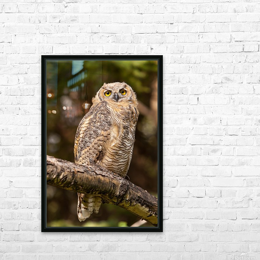 Great Horned Owl HD Sublimation Metal print with Decorating Float Frame (BOX)